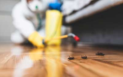 Find out when it's time to call a cockroach exterminator like Johnson Pest Control in Sevierville Tennessee.