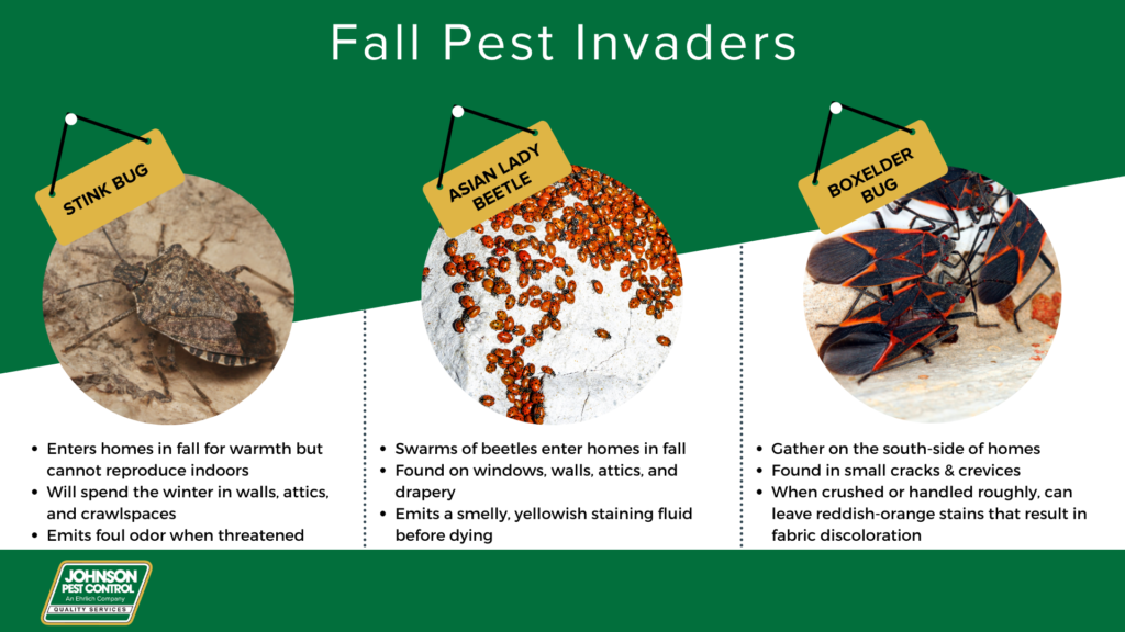 Fall pest prevention in Eastern Tennessee - Johnson Pest Control